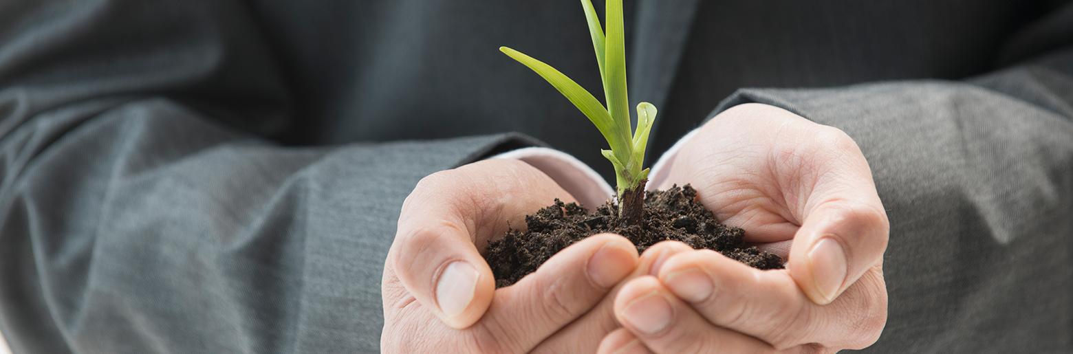 Person som holder en plante som spirer