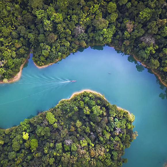 Skog med elv